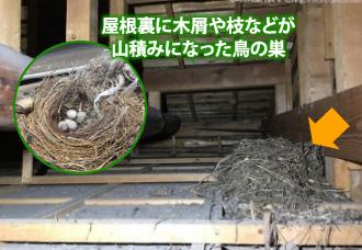 屋根裏に木屑や枝などが山積みになった鳥の巣