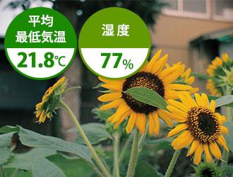 7月は平均最低気温21.8℃ 湿度77%